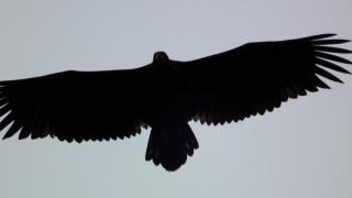 Like fantastisk å se denne fuglen!